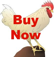 Chicken-Buy-Now
