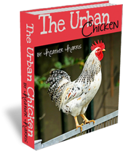chickenbook-cover