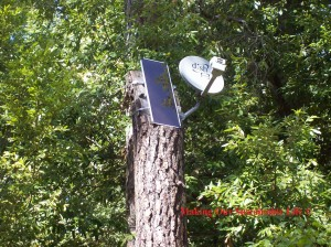 solar-panel-and-dish-on-tree-300x224