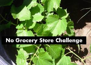 No Grocery Store Challenge 300 x214