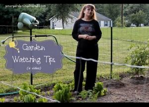 garden-watering-tips