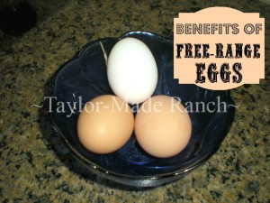 Benefits-Of-Free-Range-Eggs-TaylorMadeRanch