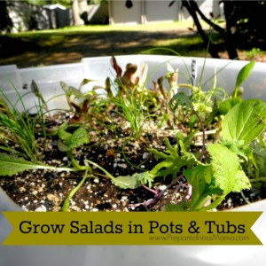 Grow-salads-in-pots-1024x1024