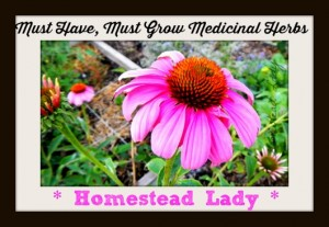 Must-have-must-grow-medicinal-herbs-www.homesteadlady.com-a-list-of-some-of-my-favorites